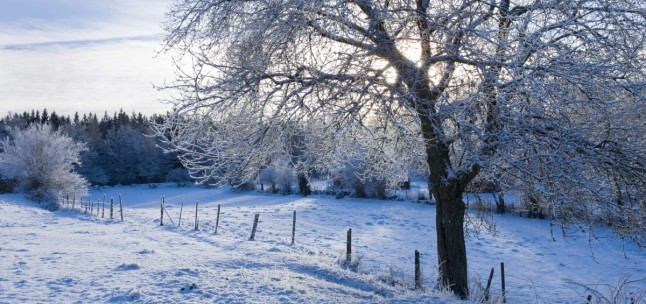 o-WINTER-WONDERLAND-SCENES-facebook-1200x565